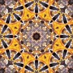 Fall leaf with sun coming through, in 8, 6, 4-fold symmetrical tiling pattern